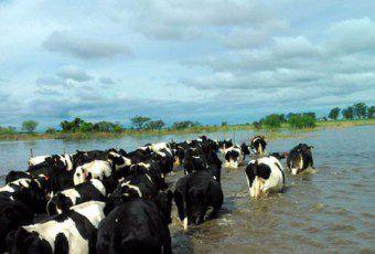 vacas.agua