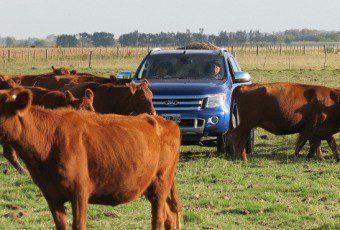 Vacas-combustible