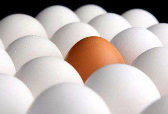 Semana-Mundial-del-Huevo