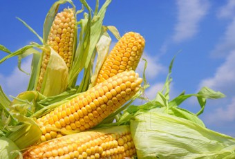 analisis-mercado-maiz
