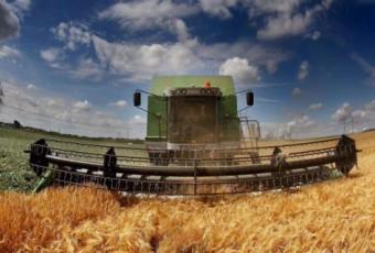 trigo-cosecha