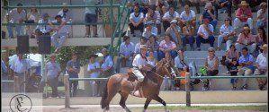 caballos.criollos