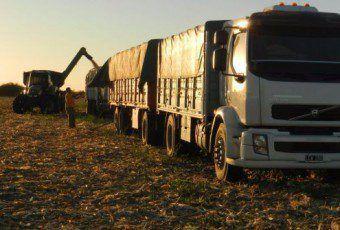 transporte granos camion 51a79475be3c0_648_335