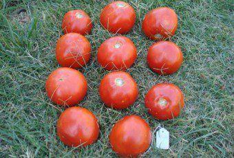 tomates-la-consulta-2