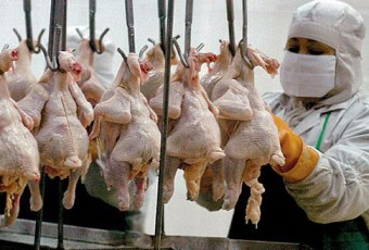 frigorificos-avicolas