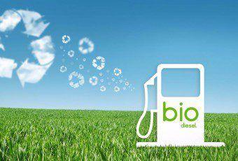 biodiesel-field