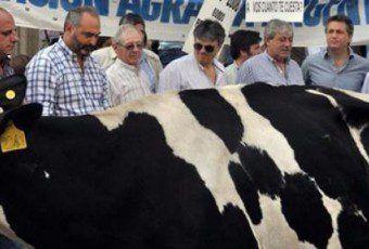 i25590-ministerio-de-agricultura-vaca-631