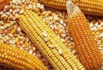 inta-mercado-granos-definir-nuestro-mercado-maiz-agosto-2016