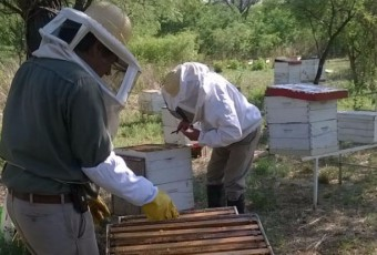cosecha-miel-final