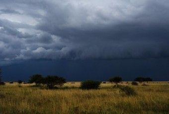 ws_dark_storm_clouds_trees_field_1920x1200