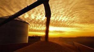 atardecer-mercado-de-granos