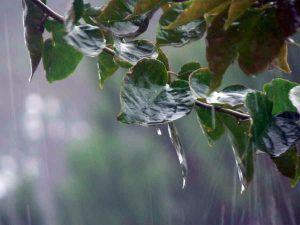 lluvia-hojas-campo