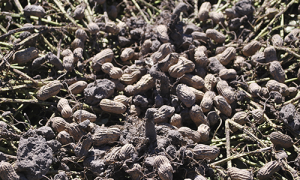 mani plantas mundoagrocba 39585df9300d200417